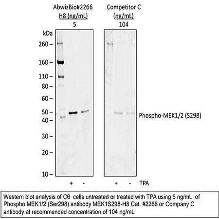 Purified anti-Phospho-MEK1 (Ser298) rabbit mAb