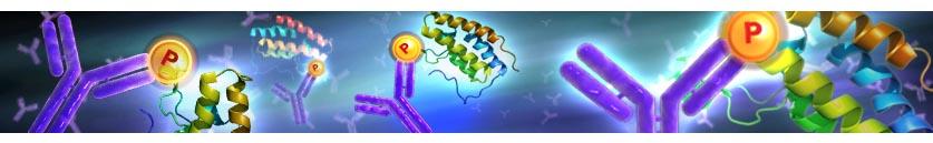 Phospho antibody reagents by Abwiz Bio